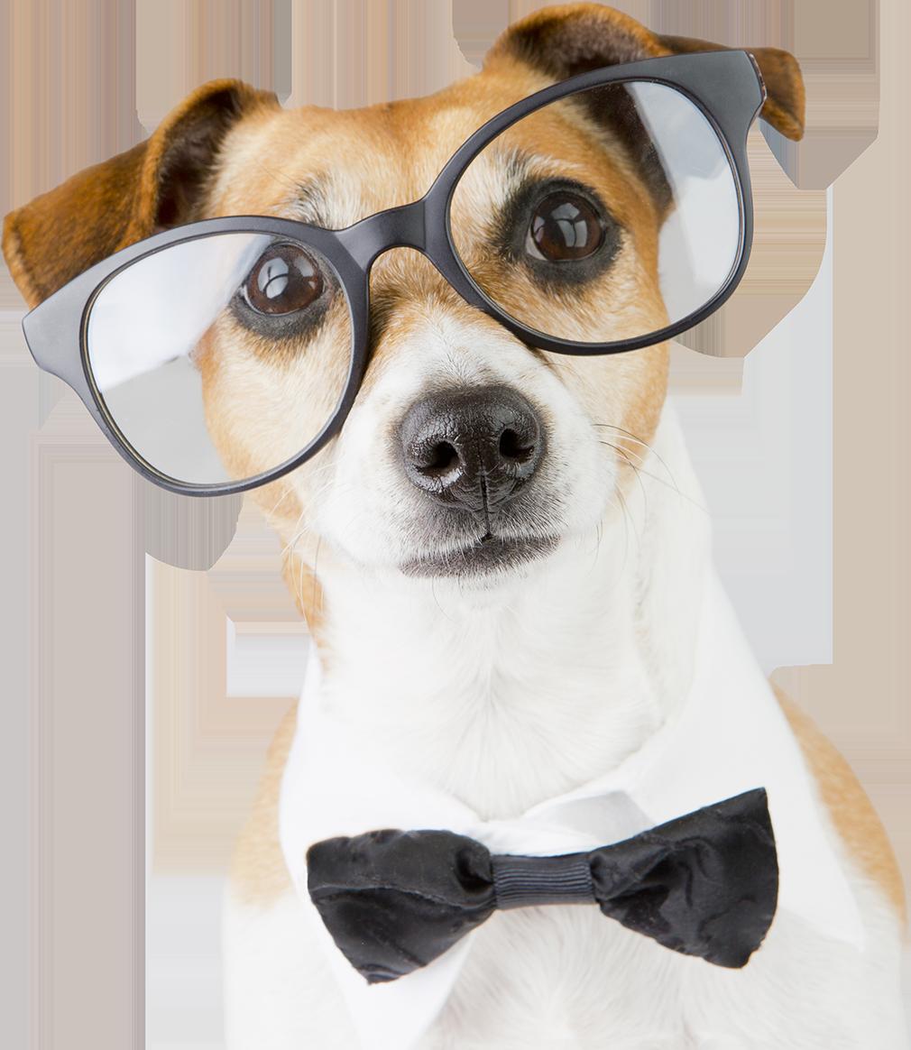 mascot rudy the writer dog